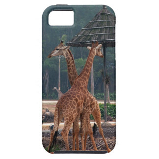 Two giraffes comforting each other in a zoo. tough iPhone 5 case