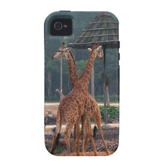 Two giraffes comforting each other in a zoo. case for the iPhone 4