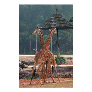 Two giraffes comforting each other in a zoo personalized flyer