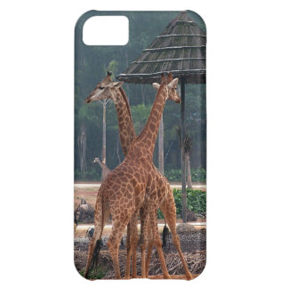 Two giraffes comforting each other in a zoo. iPhone 5C case
