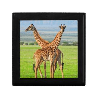 Two Giraffes Gift Box