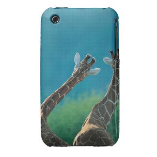 Two Giraffes (Giraffa camelopardalis) iPhone 3 Covers