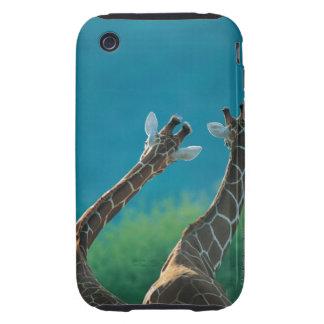 Two Giraffes (Giraffa camelopardalis) iPhone 3 Tough Cases