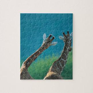 Two Giraffes (Giraffa camelopardalis) Jigsaw Puzzle