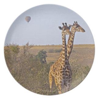Two Giraffes (Giraffa camelopardalis), Masai Plate