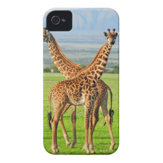 Two Giraffes iPhone 4 Case
