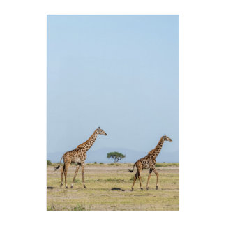 Two Giraffes Walking Acrylic Wall Art