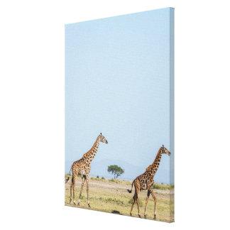 Two Giraffes Walking Canvas Print