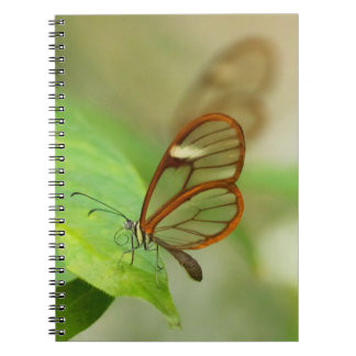 Two Glass winged butterflies Note Book