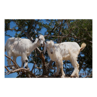 Two Goats in a Tree Poster