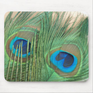 Two Golden Peacock Feathers Mouse Pads