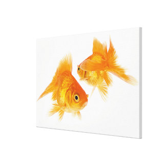 Two Goldfish Crossing Each Other Canvas Print
