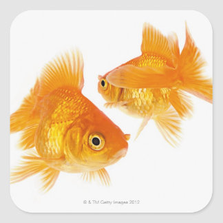Two Goldfish Crossing Each Other Square Sticker