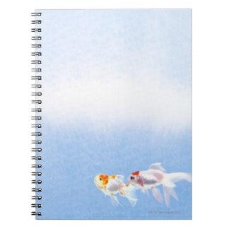 Two Goldfish Notebooks