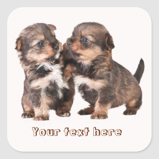 Two Graceful Yorkshire Puppies Square Sticker