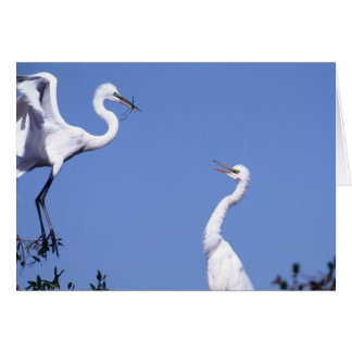 Two Great Egrets (Ardea alba) in a courtship Greeting Card