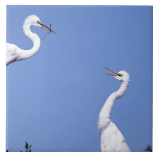 Two Great Egrets (Ardea alba) in a courtship Large Square Tile