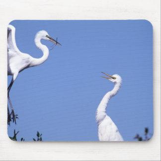Two Great Egrets (Ardea alba) in a courtship Mouse Mat