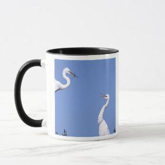 Two Great Egrets (Ardea alba) in a courtship Mug