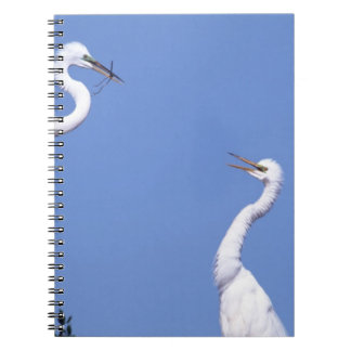 Two Great Egrets (Ardea alba) in a courtship Notebooks