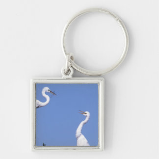 Two Great Egrets (Ardea alba) in a courtship Silver-Colored Square Key Ring