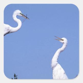 Two Great Egrets (Ardea alba) in a courtship Square Sticker