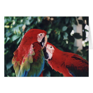 """Two Green Wing Macaws"" Birdc Photo Greeting Card"