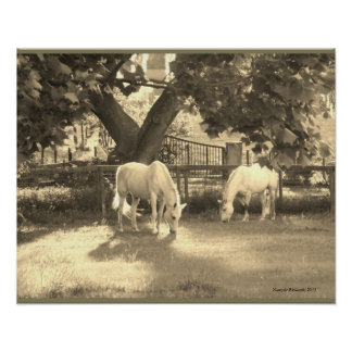 Two Grey Horses Peacefully Grazing in Sepia Tone Poster