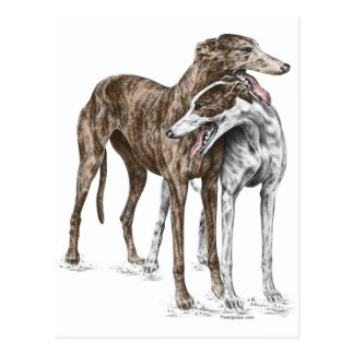 Two Greyhound Friends Dog Art Postcard