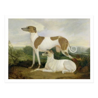 Two Greyhounds in a Landscape (oil on canvas) Postcard