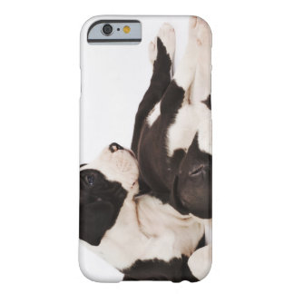 Two Harlequin Great Dane puppies on white Barely There iPhone 6 Case