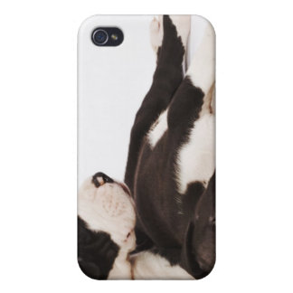 Two Harlequin Great Dane puppies on white Cases For iPhone 4