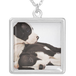 Two Harlequin Great Dane puppies on white Silver Plated Necklace