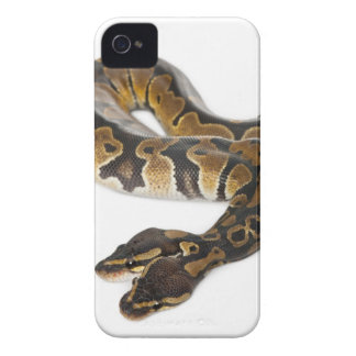 Two headed Royal Python or Ball Python - Python Case-Mate iPhone 4 Cases