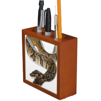 Two headed Royal Python or Ball Python - Python Desk Organiser