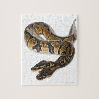 Two headed Royal Python or Ball Python - Python Jigsaw Puzzle