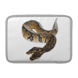 Two headed Royal Python or Ball Python - Python Sleeve For MacBook Air