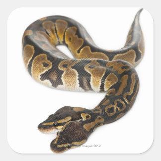 Two headed Royal Python or Ball Python - Python Stickers