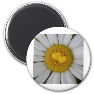 Two hearts on marguerite refrigerator magnet