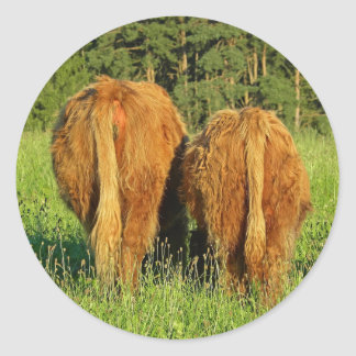 Two Highland Cattle Rears in Upper Austria Round Sticker