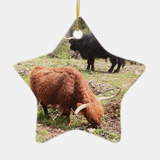 Two highland cattle, Scotland Ceramic Star Decoration