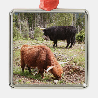 Two highland cattle, Scotland Silver-Colored Square Decoration