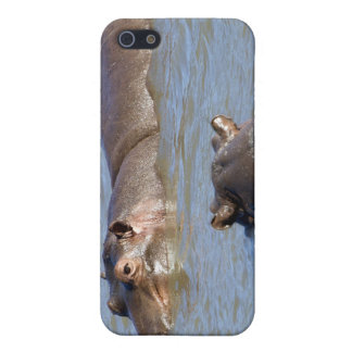 Two hippos in a river, Kruger National Park, iPhone 5/5S Cover