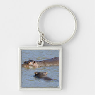 Two hippos in a river, Kruger National Park, Silver-Colored Square Key Ring