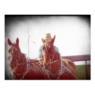 Two Horse Amish Team Faux Vintage Postcard