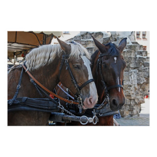 Two horses. Blonde and brunette. Poster