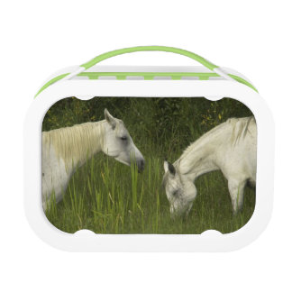 Two horses eating grass lunch box