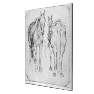 Two horses, from the The Vallardi Album Gallery Wrapped Canvas