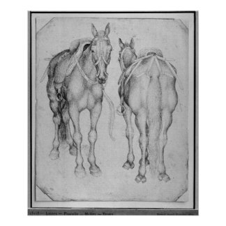 Two horses, from the The Vallardi Album Poster