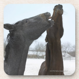 two horses neighing beverage coaster